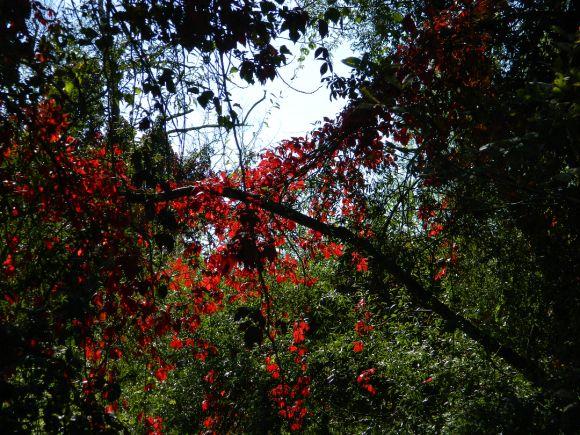 http://dpsslove.cowblog.fr/images/import/085.jpg